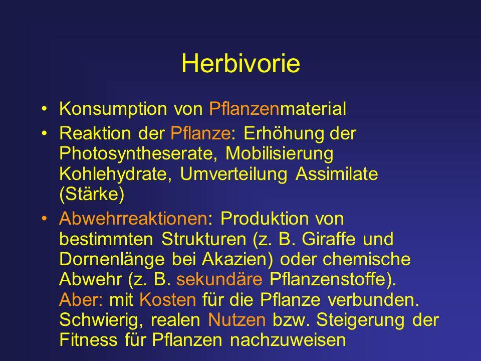 Herbivorie Konsumption von Pflanzenmaterial