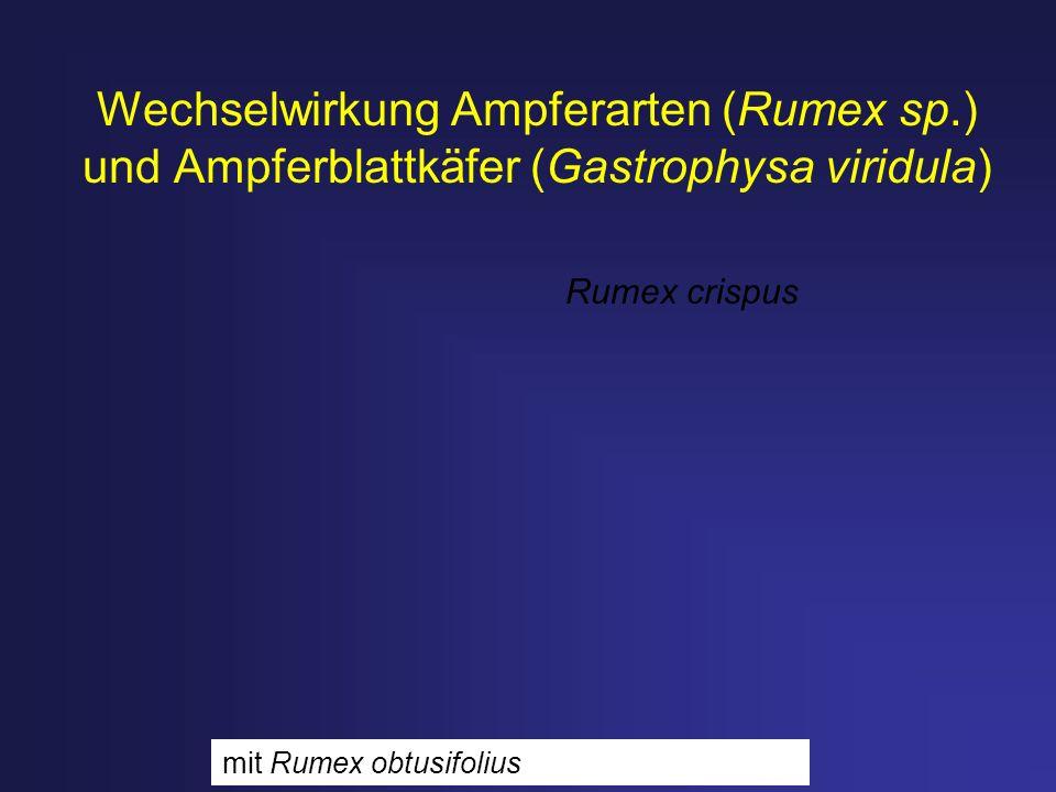 Wechselwirkung Ampferarten (Rumex sp