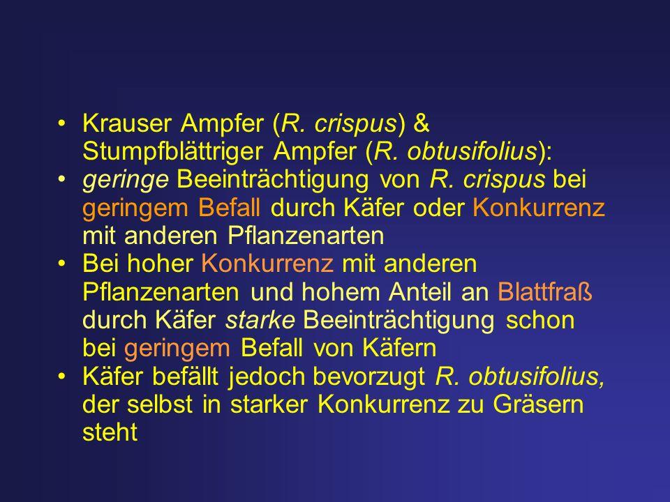 Krauser Ampfer (R. crispus) & Stumpfblättriger Ampfer (R