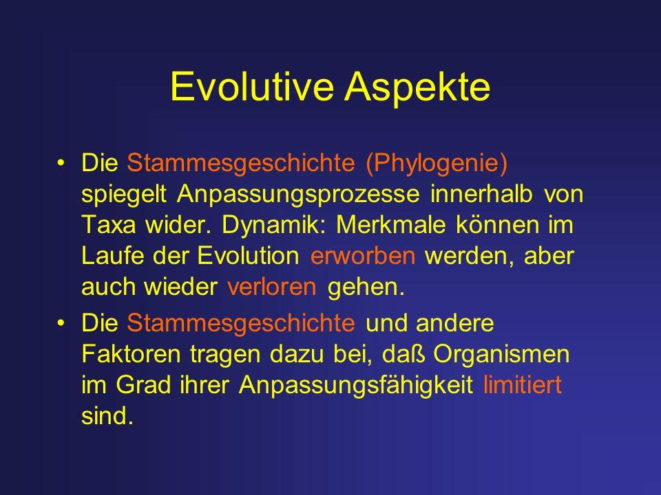 Evolutive Aspekte