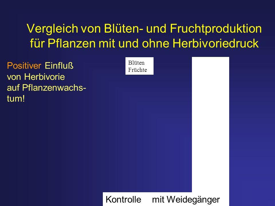 Vergleich von Blüten- und Fruchtproduktion für Pflanzen mit und ohne Herbivoriedruck