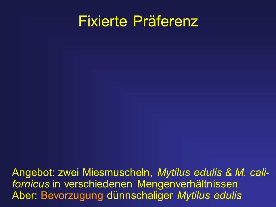 Fixierte Präferenz Angebot: zwei Miesmuscheln, Mytilus edulis & M. cali- fornicus in verschiedenen Mengenverhältnissen.