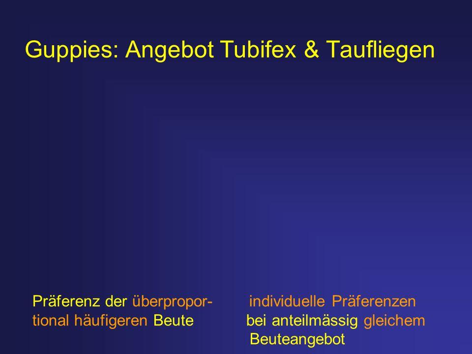 Guppies: Angebot Tubifex & Taufliegen