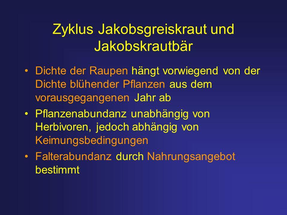 Zyklus Jakobsgreiskraut und Jakobskrautbär