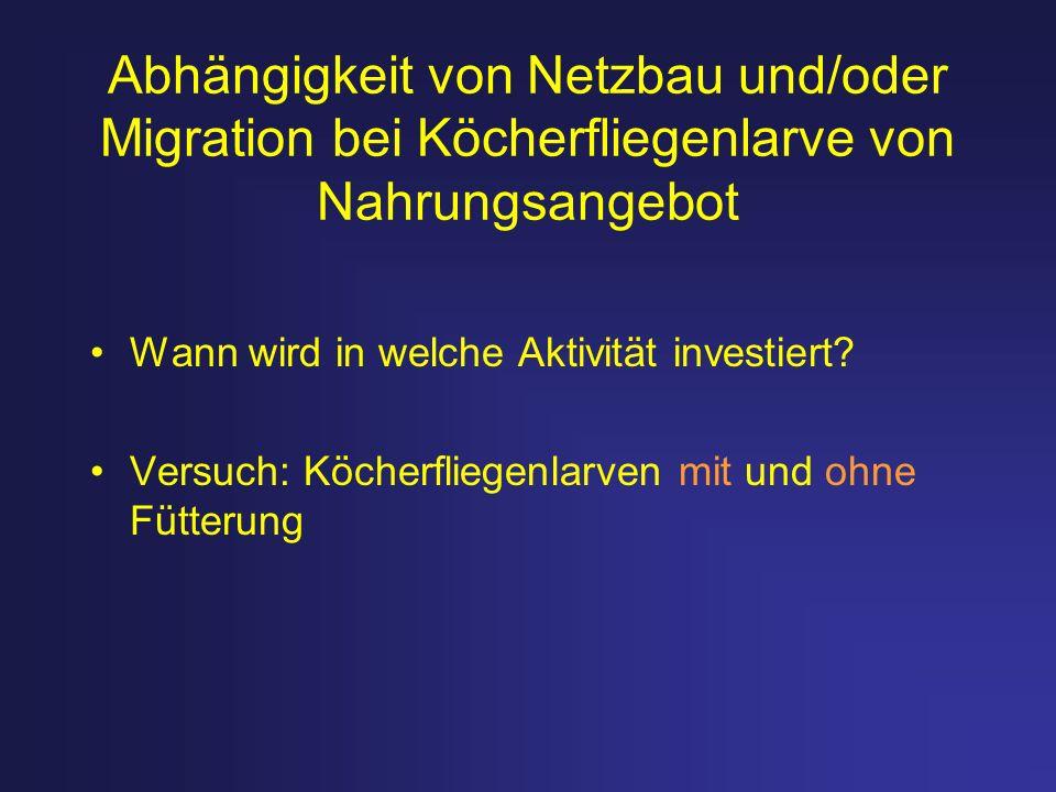 Abhängigkeit von Netzbau und/oder Migration bei Köcherfliegenlarve von Nahrungsangebot