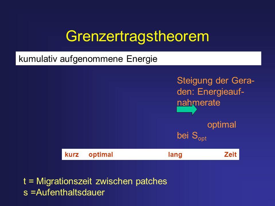 Grenzertragstheorem kumulativ aufgenommene Energie Steigung der Gera-