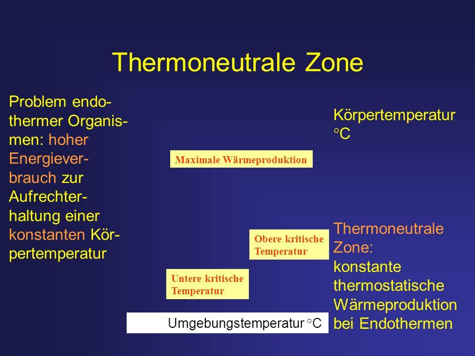 Thermoneutrale Zone Problem endo- Körpertemperatur °C thermer Organis-