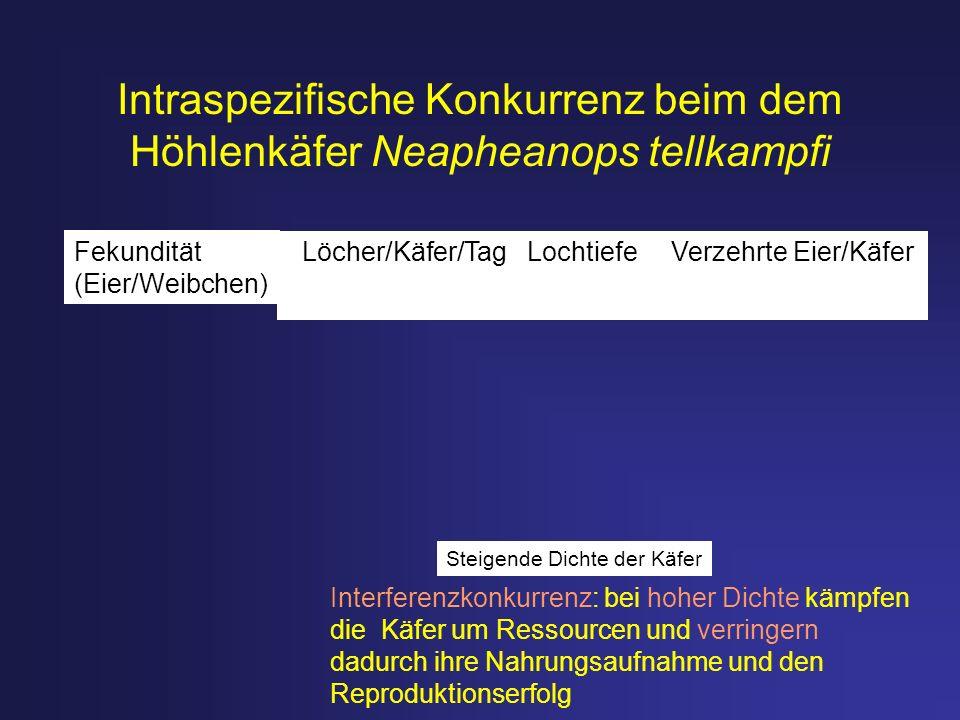 Intraspezifische Konkurrenz beim dem Höhlenkäfer Neapheanops tellkampfi