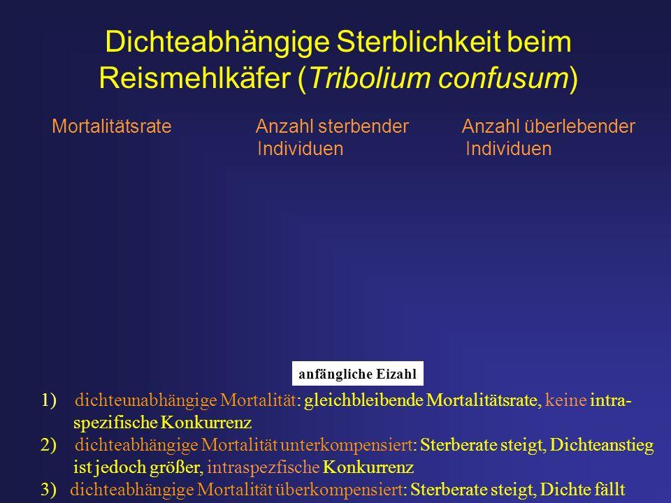 Dichteabhängige Sterblichkeit beim Reismehlkäfer (Tribolium confusum)