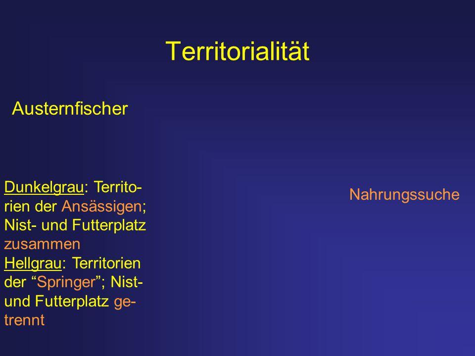 Territorialität Austernfischer Dunkelgrau: Territo- Nahrungssuche