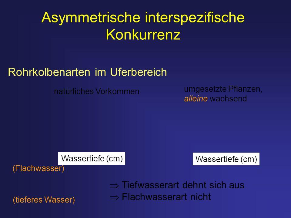 Asymmetrische interspezifische Konkurrenz