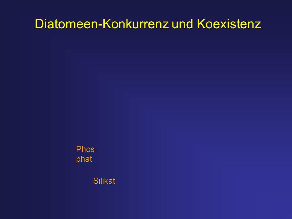 Diatomeen-Konkurrenz und Koexistenz