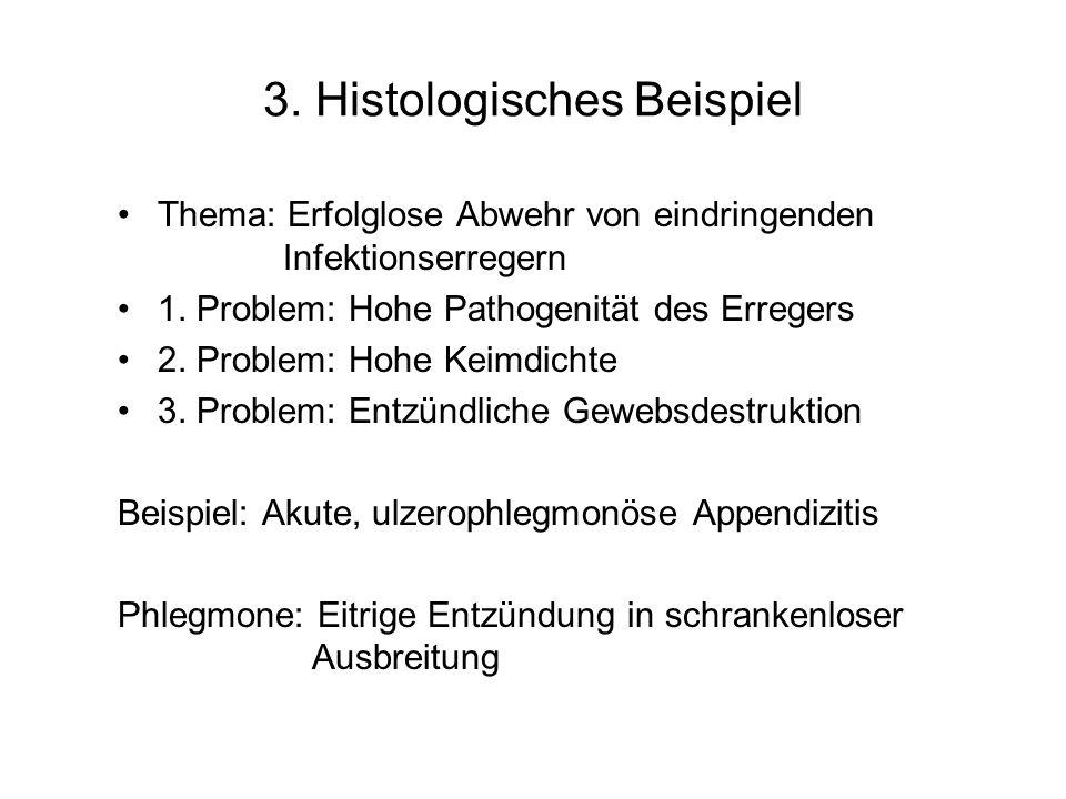 3. Histologisches Beispiel