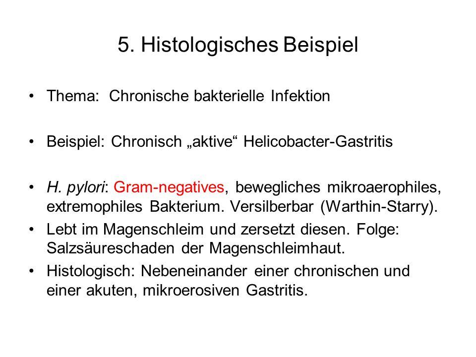 5. Histologisches Beispiel
