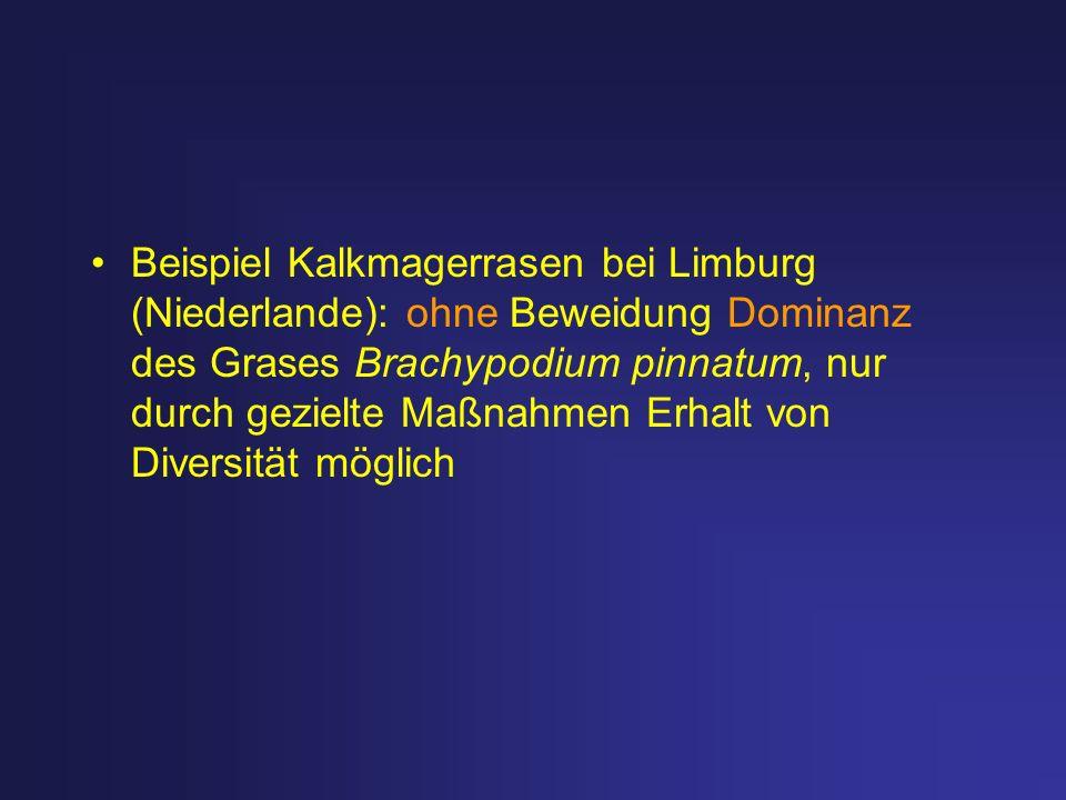 Beispiel Kalkmagerrasen bei Limburg (Niederlande): ohne Beweidung Dominanz des Grases Brachypodium pinnatum, nur durch gezielte Maßnahmen Erhalt von Diversität möglich
