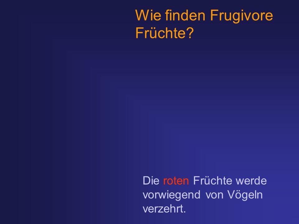 Wie finden Frugivore Früchte