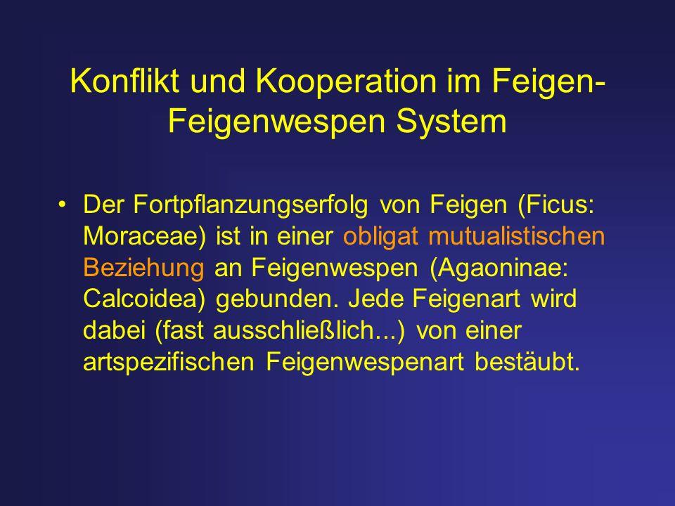 Konflikt und Kooperation im Feigen-Feigenwespen System