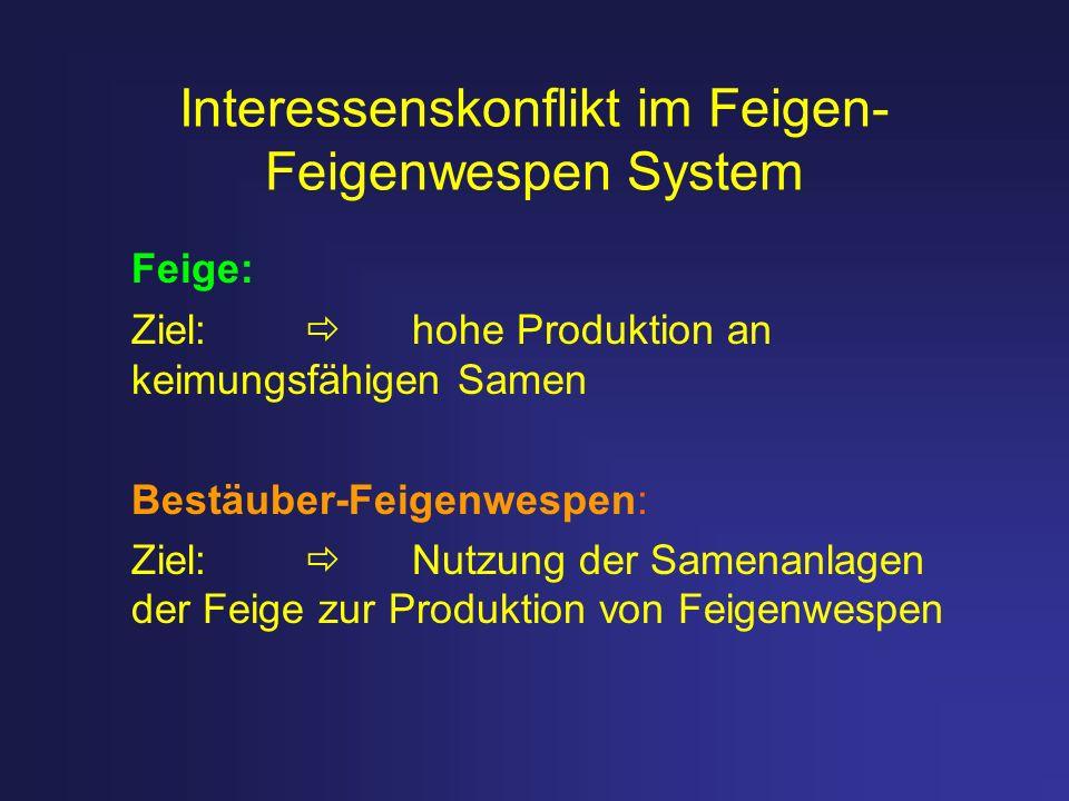 Interessenskonflikt im Feigen-Feigenwespen System