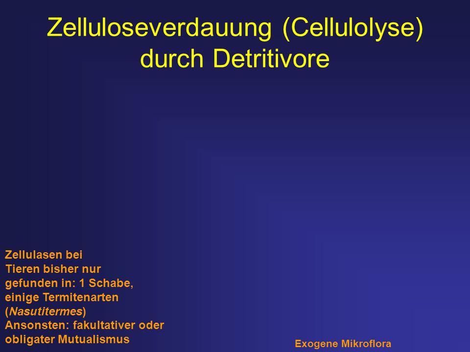 Zelluloseverdauung (Cellulolyse) durch Detritivore