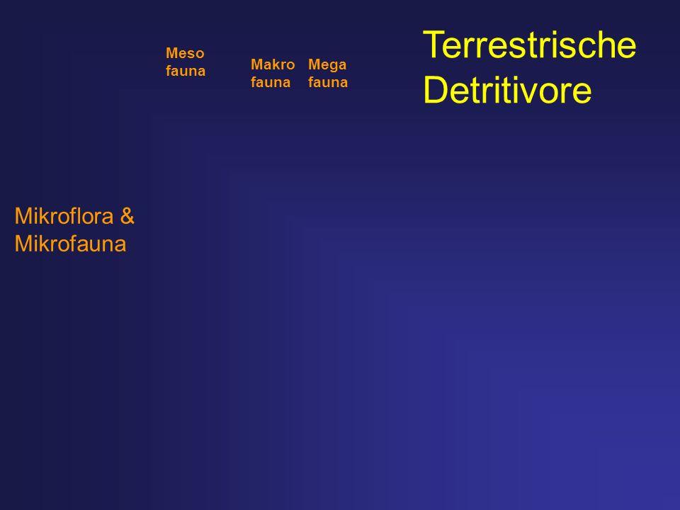 Terrestrische Detritivore Mikroflora & Mikrofauna Meso fauna