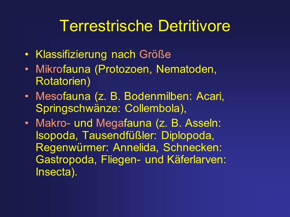 Terrestrische Detritivore