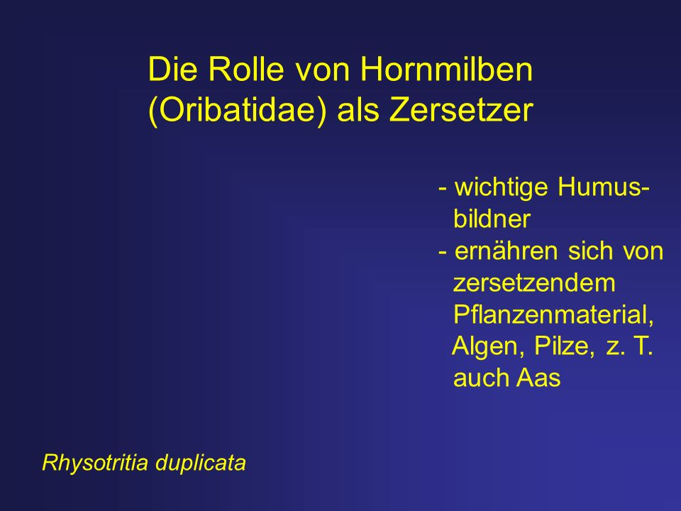 Die Rolle von Hornmilben (Oribatidae) als Zersetzer