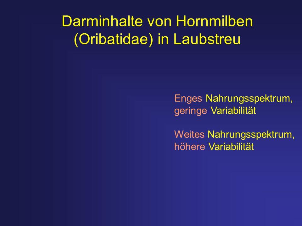 Darminhalte von Hornmilben (Oribatidae) in Laubstreu