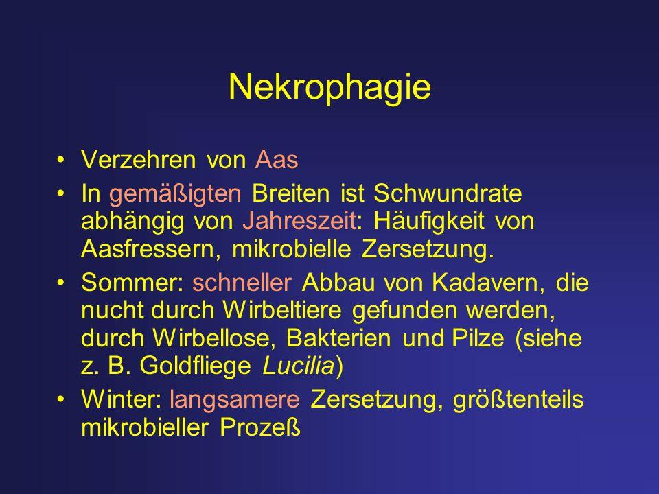 Nekrophagie Verzehren von Aas