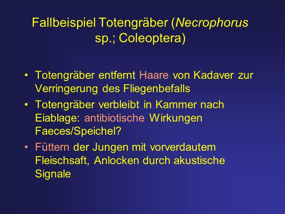 Fallbeispiel Totengräber (Necrophorus sp.; Coleoptera)
