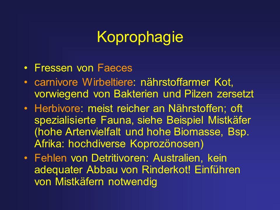 Koprophagie Fressen von Faeces