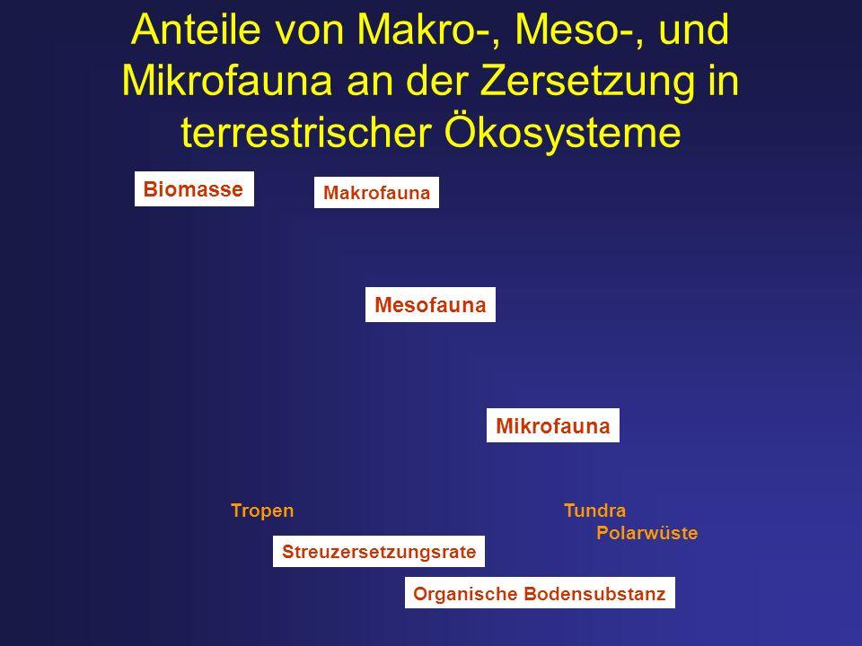Anteile von Makro-, Meso-, und Mikrofauna an der Zersetzung in terrestrischer Ökosysteme