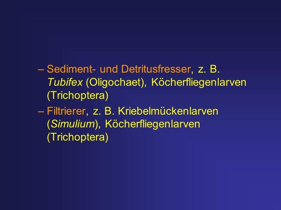 Sediment- und Detritusfresser, z. B