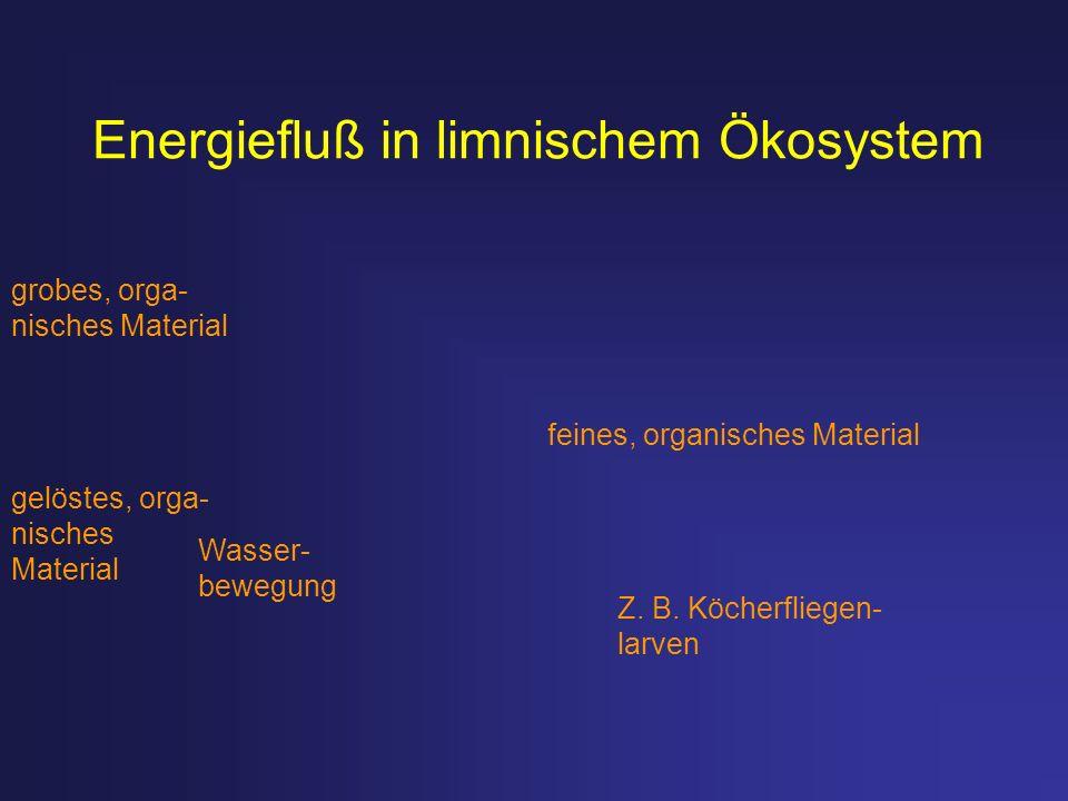 Energiefluß in limnischem Ökosystem