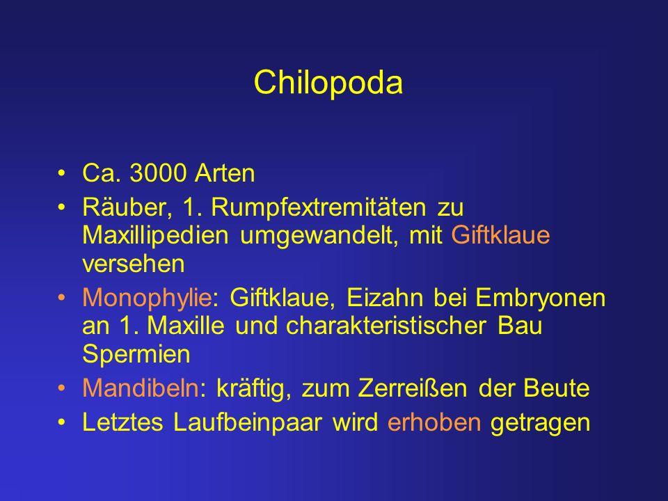 Chilopoda Ca. 3000 Arten. Räuber, 1. Rumpfextremitäten zu Maxillipedien umgewandelt, mit Giftklaue versehen.
