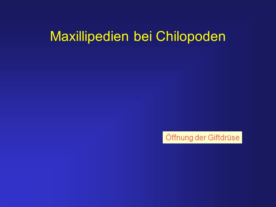 Maxillipedien bei Chilopoden