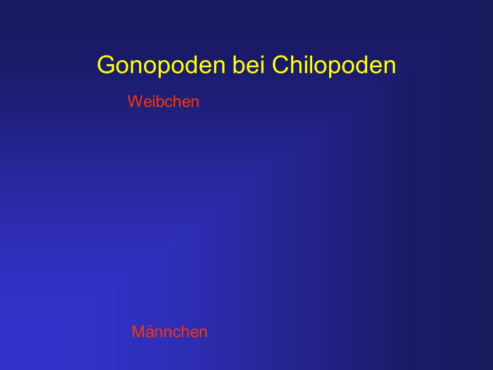 Gonopoden bei Chilopoden