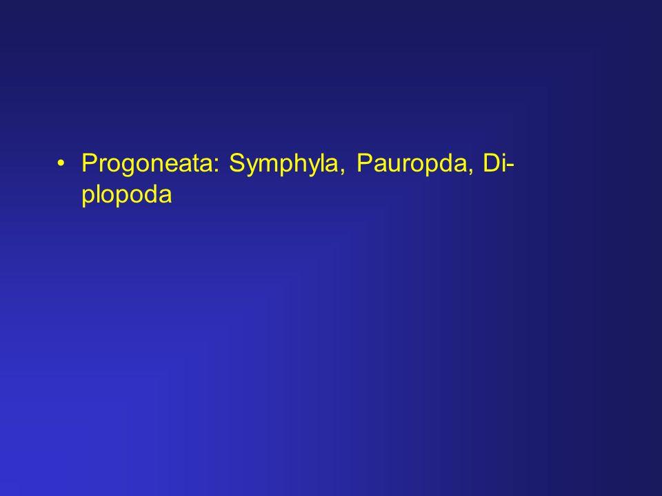 Progoneata: Symphyla, Pauropda, Di- plopoda