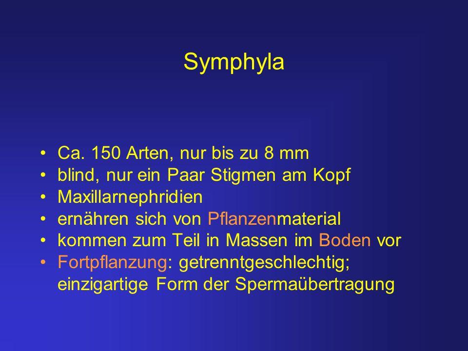 Symphyla Ca. 150 Arten, nur bis zu 8 mm
