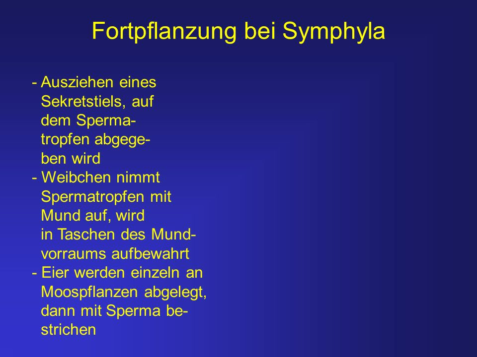 Fortpflanzung bei Symphyla