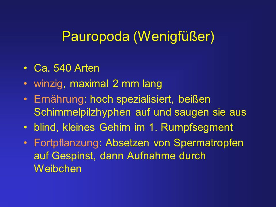Pauropoda (Wenigfüßer)