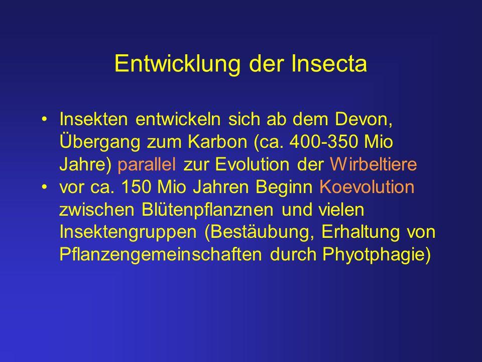 Entwicklung der Insecta