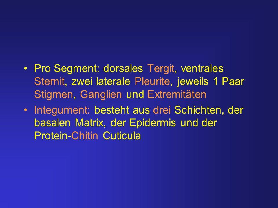 Pro Segment: dorsales Tergit, ventrales Sternit, zwei laterale Pleurite, jeweils 1 Paar Stigmen, Ganglien und Extremitäten