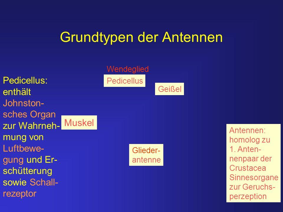 Grundtypen der Antennen