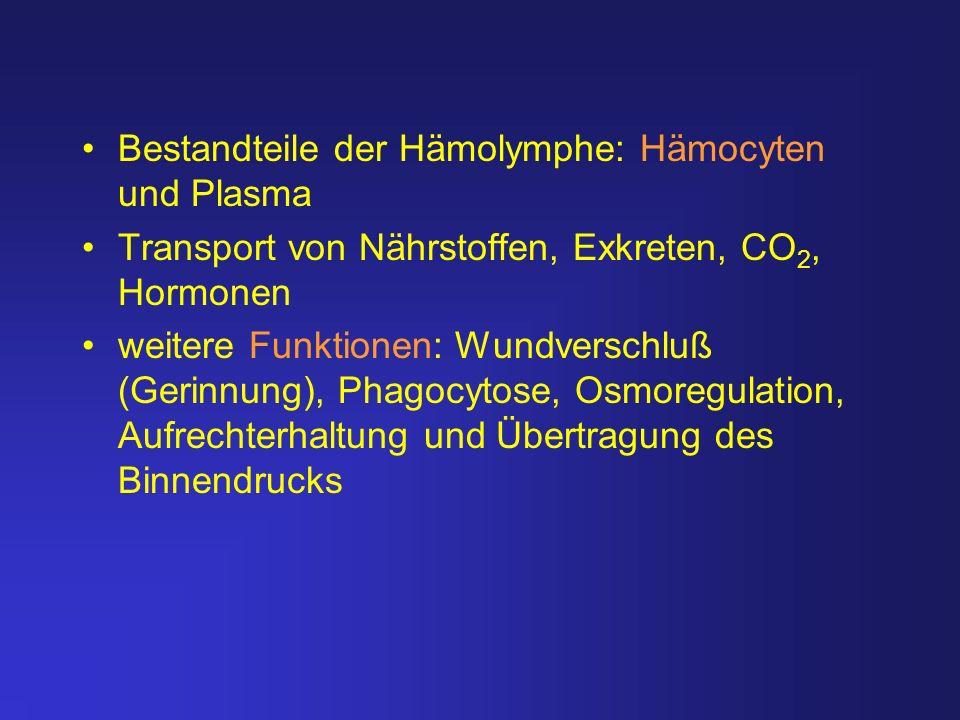 Bestandteile der Hämolymphe: Hämocyten und Plasma