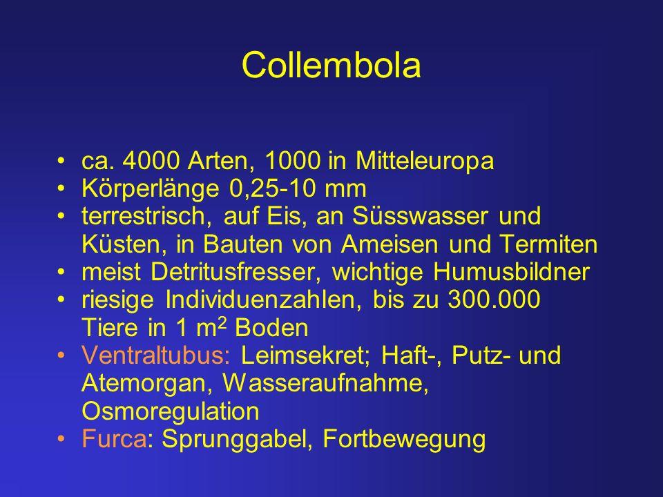 Collembola ca. 4000 Arten, 1000 in Mitteleuropa Körperlänge 0,25-10 mm