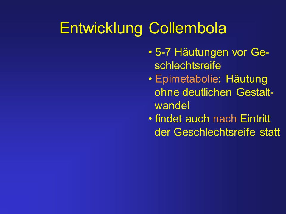 Entwicklung Collembola