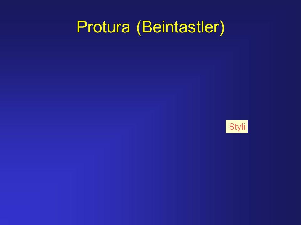 Protura (Beintastler)