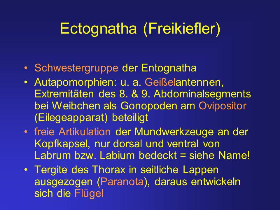 Ectognatha (Freikiefler)