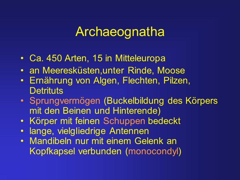 Archaeognatha Ca. 450 Arten, 15 in Mitteleuropa