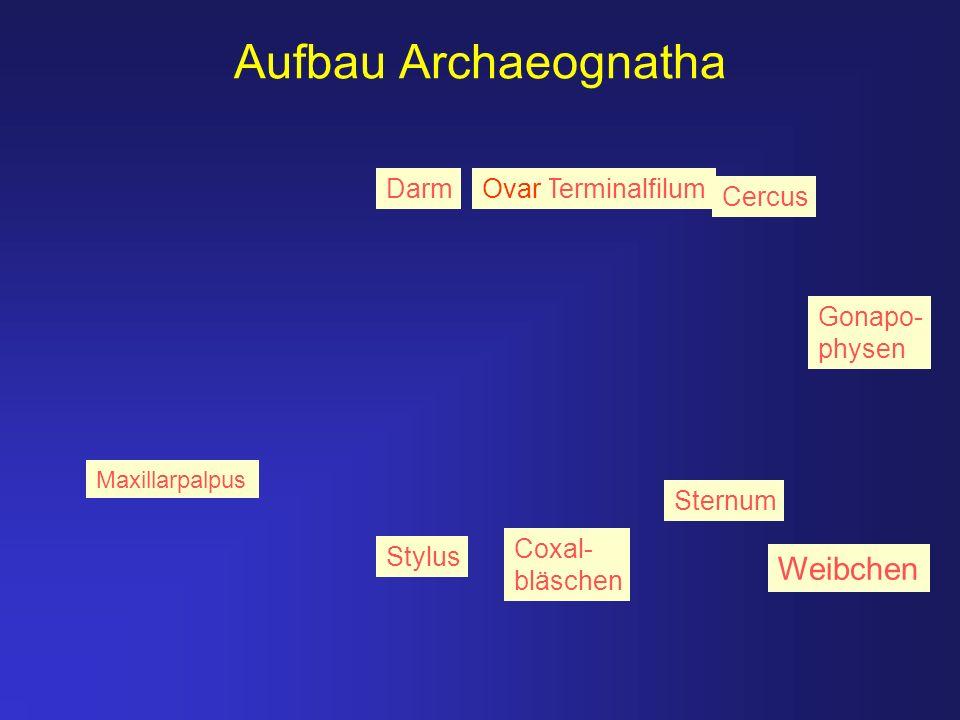 Aufbau Archaeognatha Weibchen Darm Ovar Terminalfilum Cercus Gonapo-